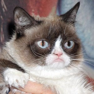 Grumpy Cat Real Phone Number Whatsapp