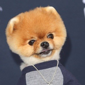 JiffPom Real Phone Number Whatsapp
